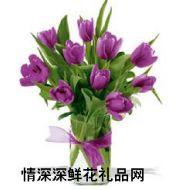 郁金香,只(紫)爱你