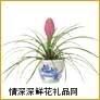 盆栽兰花,铁兰