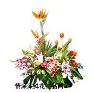 祝福鲜花,花香鸟语