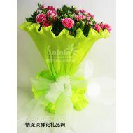 祝福�r花,十二星座花�Z-�p�~座-花中的蝴蝶