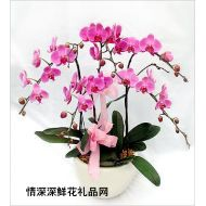 北京鲜花,喜庆蝴蝶兰