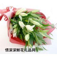 百合花,绿色好心情