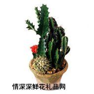 绿叶植物,仙人掌