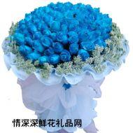 蓝色妖姬,水蓝梦幻