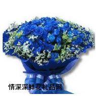 蓝色妖姬,蓝色海洋