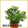 鲜花盆栽,绣珍玫瑰(进口)
