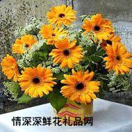 太阳菊,时时想念