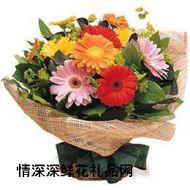 友情鲜花,朝阳
