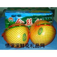 水果品种,精品金丝柚