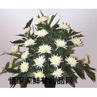 清明节鲜花,追忆