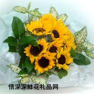 太阳菊,阳光活力