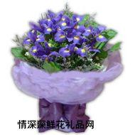 广州鲜花,紫色的梦