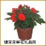 鲜花盆栽,凤仙
