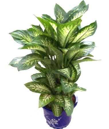 16种剧毒植物揭秘【引用】 - 伊人 凡 - yirenfan915的博客